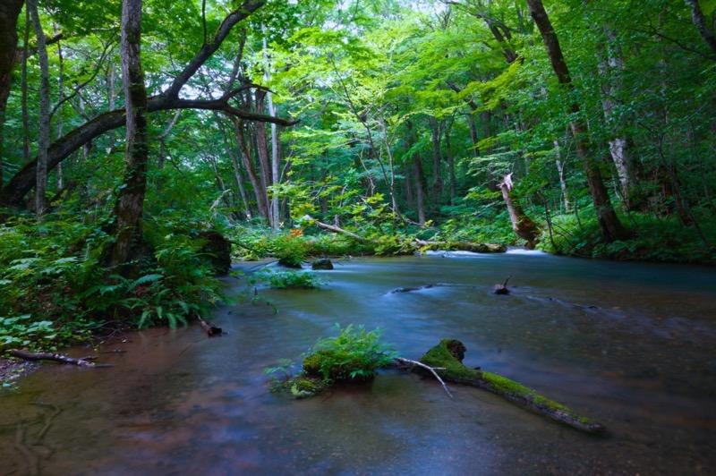 十和田湖・奥入瀬渓流 (11)