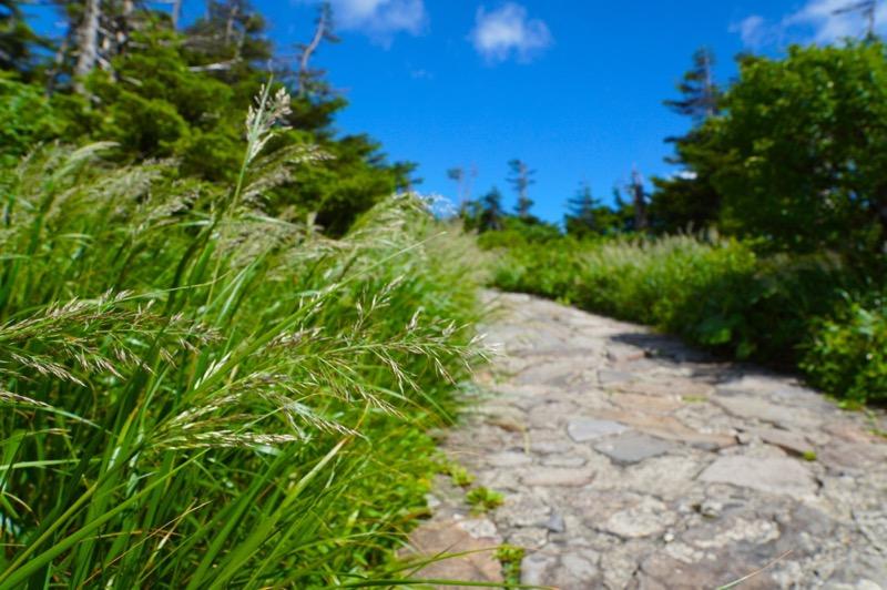 登山道の植物