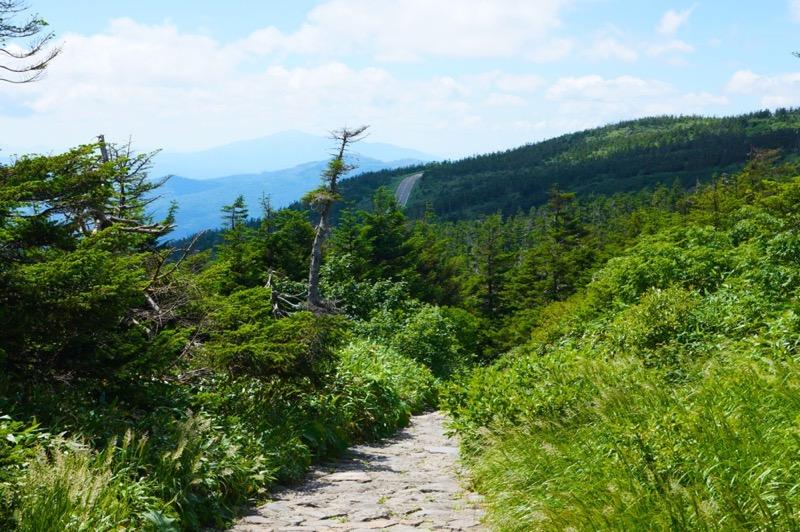 綺麗な登山道