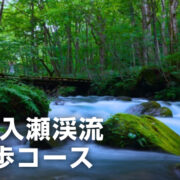 【青森県】写真好きなら「奥入瀬渓流」は絶対に行くべき絶景スポットだった!!