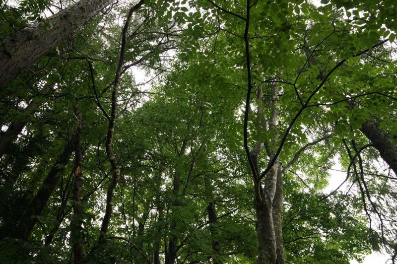 雨の日の木