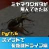 スイフトで長距離ドライブ! 秋田の山荘にミヤマクワガタが4匹も飛んできた話 Part6