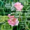 学校の敷地にバラが咲いていたのでsony α77の単焦点レンズで撮影してみた!