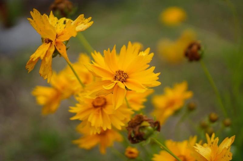 花を撮ってみた