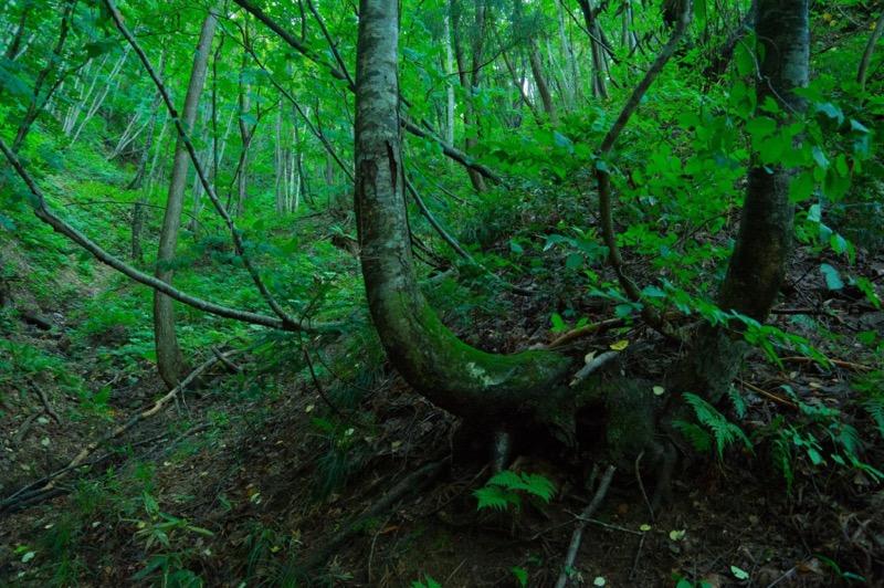 幻想的な森林