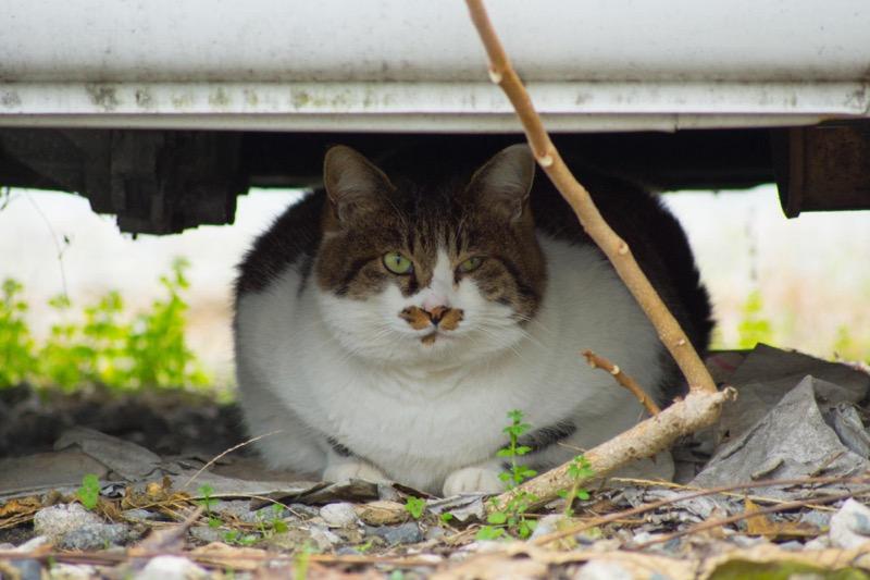 シグマ 70-300 sony ヤクザ猫