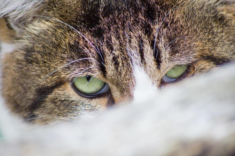 シグマ 70-300 sony 猫の視線