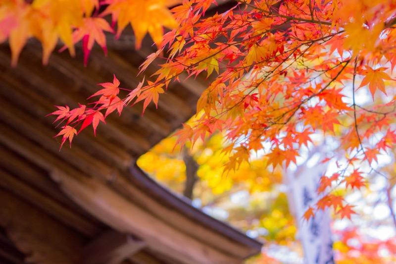 中尊寺α77撮影旅行_iPhoneで紅葉を綺麗に撮影する方法