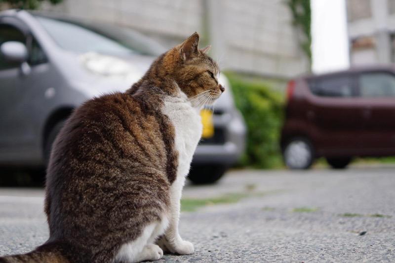 学校の猫_sonyレンズ解像度