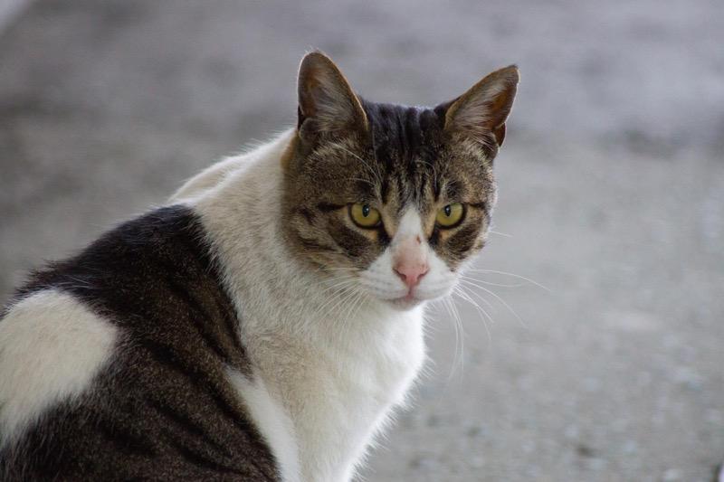 シグマ 70-300 sony 猫の作例