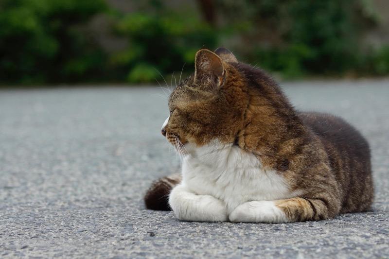 学校の猫_単焦点レンズ表現手法