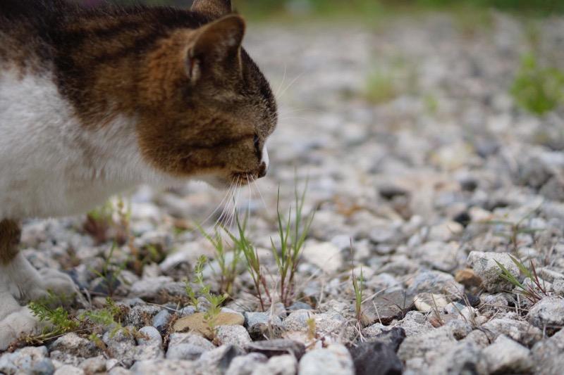 学校の猫_猫のしぐさ