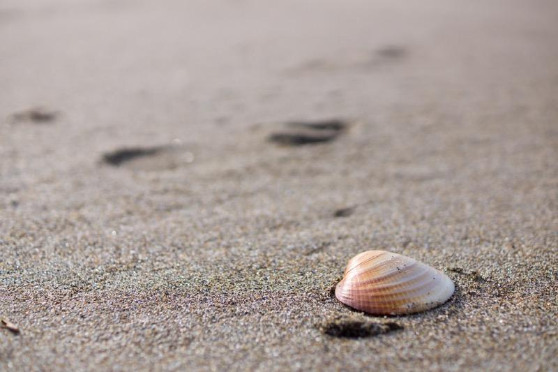 日本海にある貝殻