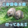 仕事を辞めてやったこと。 友人と一緒に上野動物園に行ってみた。