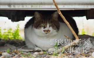 【癒やし画像】自分もそろそろ野良になりそうなので野良猫との思い出を振り返る。