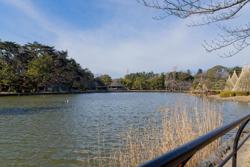 千葉公園 散歩