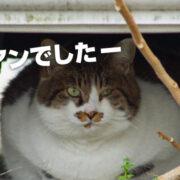 「猫(ネコ)」は人間を監視するために送り込まれたエイリアンだった!?