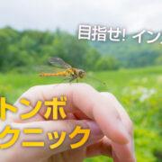 「手乗りトンボ」を誰でも簡単に撮る方法 インスタばえ間違いなし!!